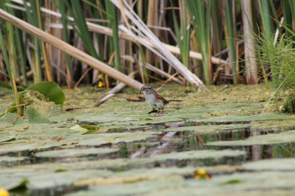 Check it out - Kawartha Land Trust Properties are on eBird