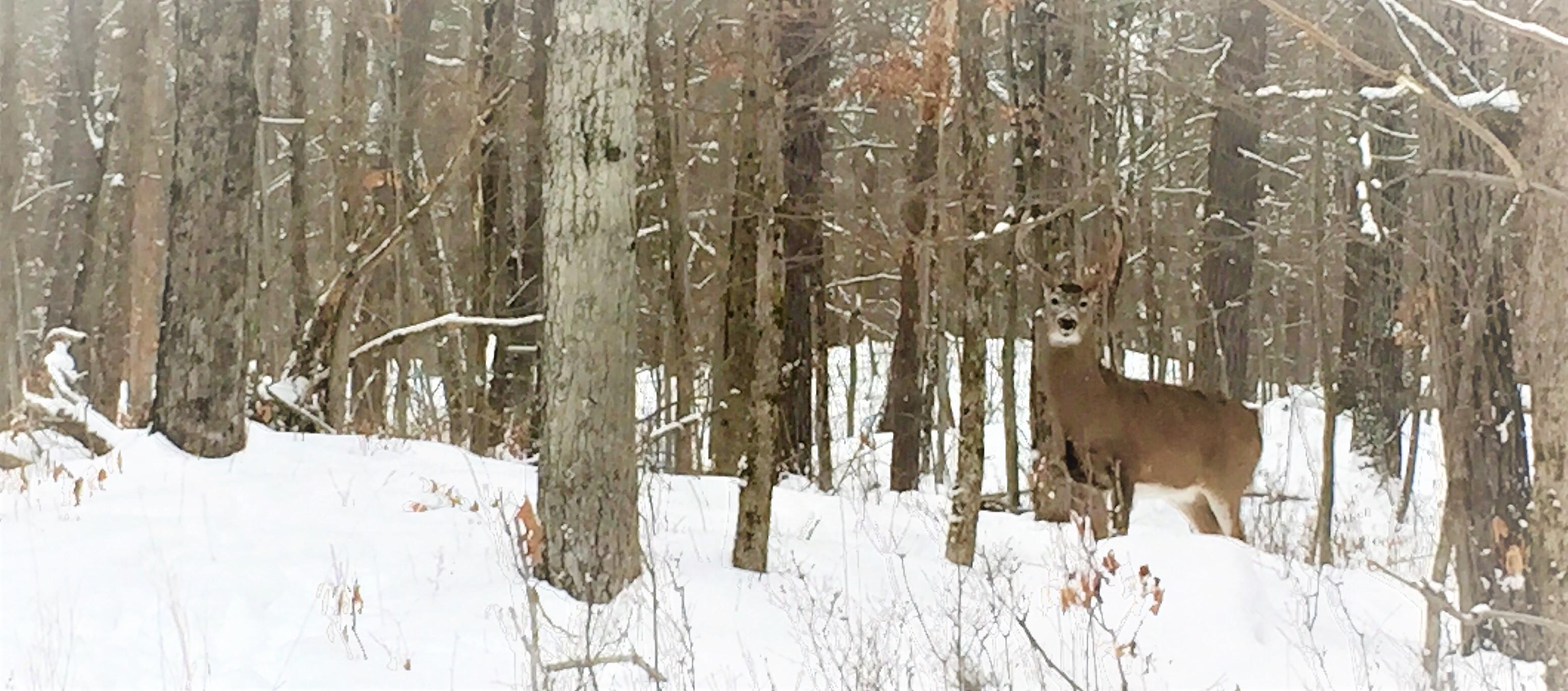 Photo snapped near KLT's Stony Lake Trails