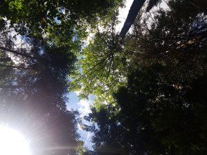 Fell canopy