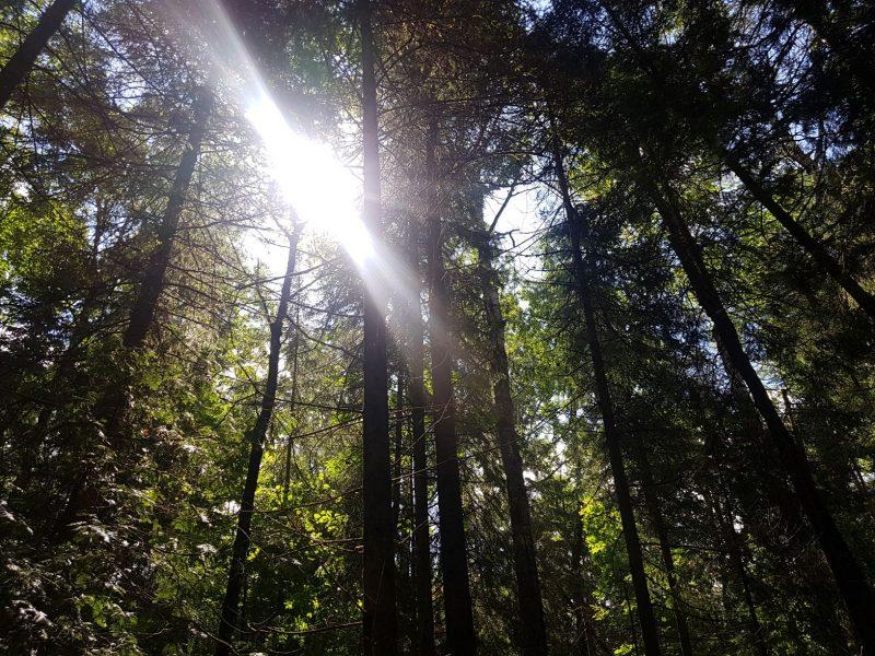Fell Forest sunlight