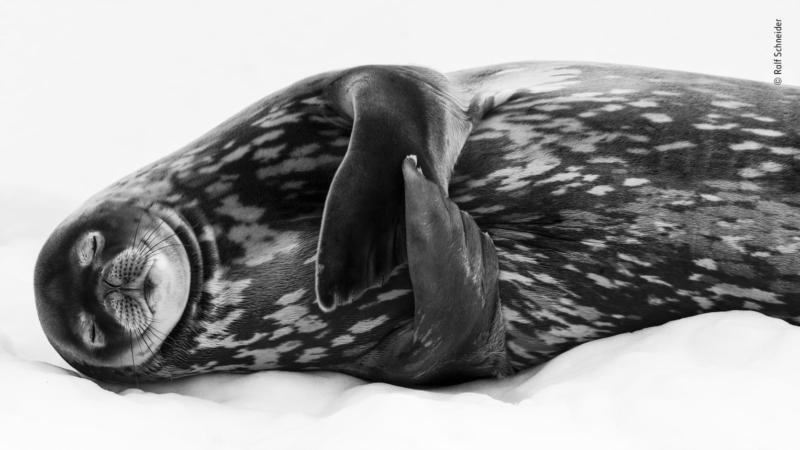 © Ralf Schneider - Wildlife Photographer of the Year